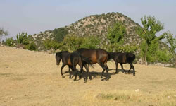 Horses at Spil Mountain